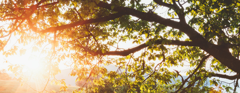 own ways in diagnosis of cancer simonton center eu